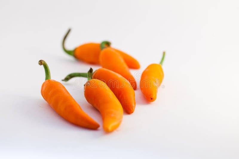 Oranje capsicum op een witte achtergrond stock fotografie
