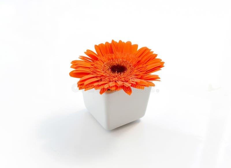 Oranje chrysanten in witte vaas stock afbeeldingen