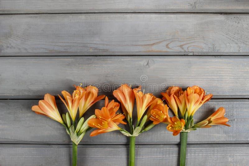 Oranje cliviabloem op houten achtergrond stock foto
