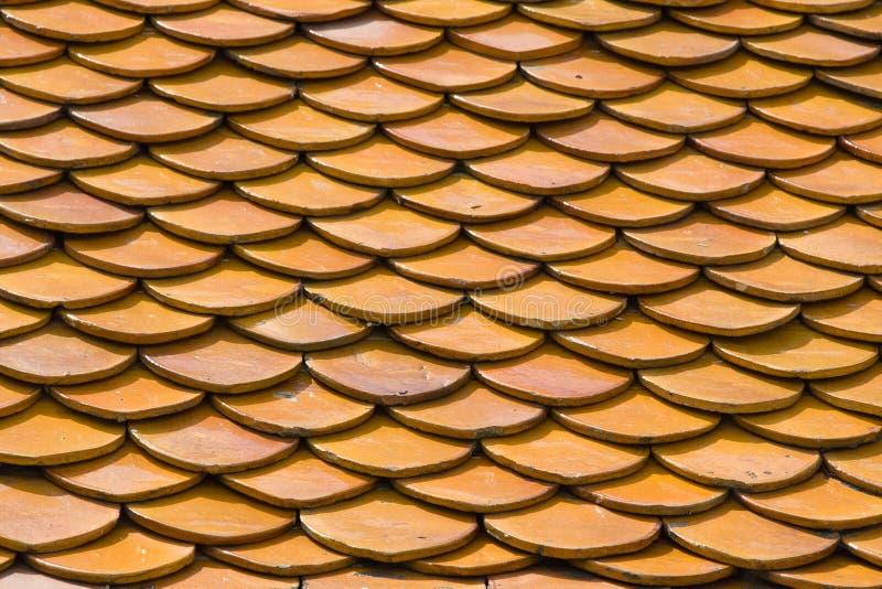 Oranje daktegels royalty-vrije stock afbeelding