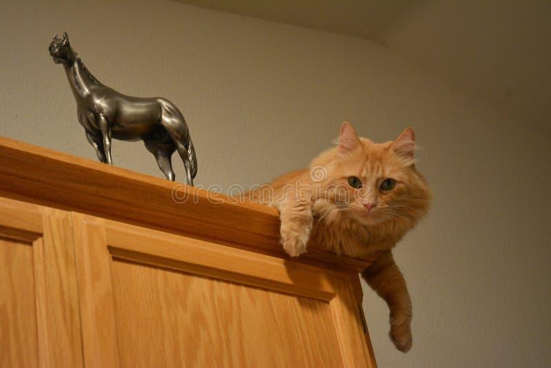 Oranje die gestreepte katkat bovenop kabinet met paardstandbeeld wordt neergestreken royalty-vrije stock afbeeldingen