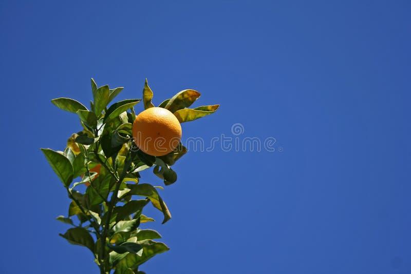 Oranje en blauwe hemel royalty-vrije stock foto