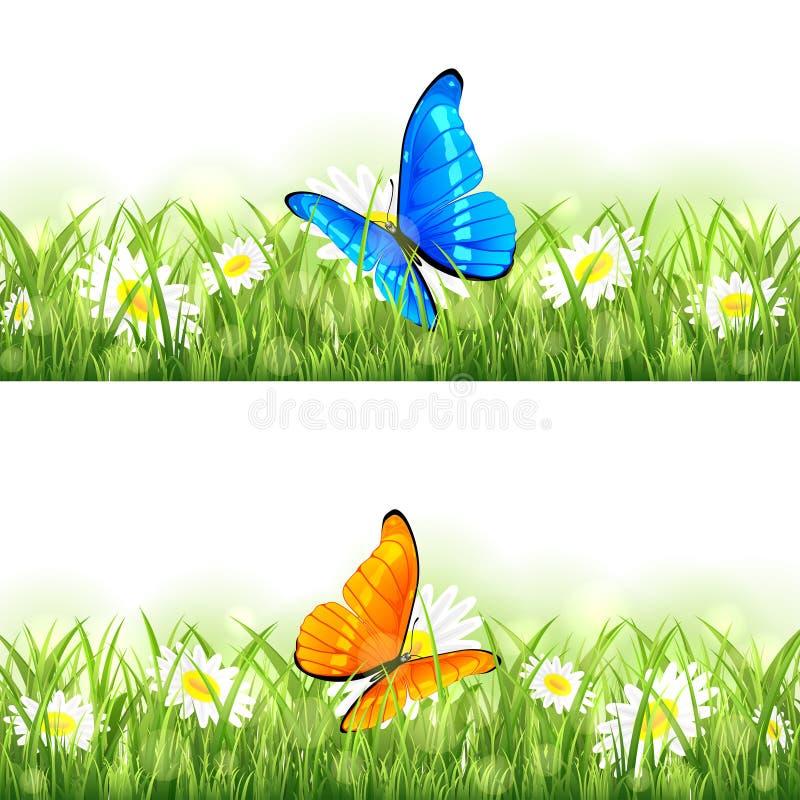 Oranje en blauwe vlinder op de bloem stock illustratie