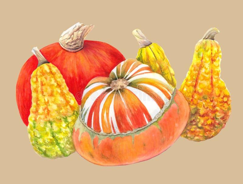 Oranje en gele pompoenen op beige achtergrond De waterverfillustrationu van de herfstgroenten Het schilderen van het stilleven stock illustratie