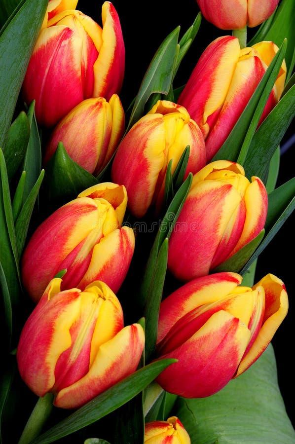 Oranje en rode tulpen royalty-vrije stock afbeeldingen
