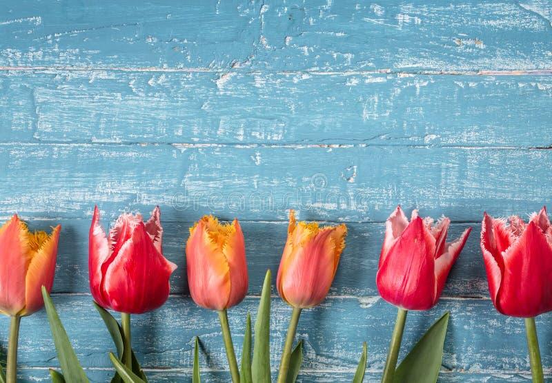 Oranje en rode tulpen op blauwe houten achtergrond royalty-vrije stock fotografie