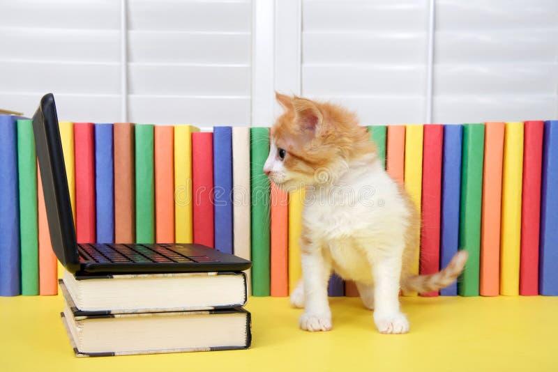 Oranje en wit gestreepte katkatje die laptop computer bekijken royalty-vrije stock foto's