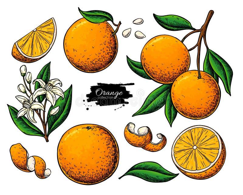 Oranje fruit vectortekening De illustratie van het de zomervoedsel stock illustratie