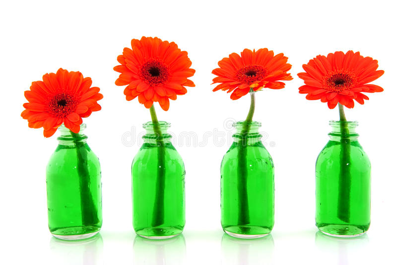 Oranje Gerber stock afbeelding