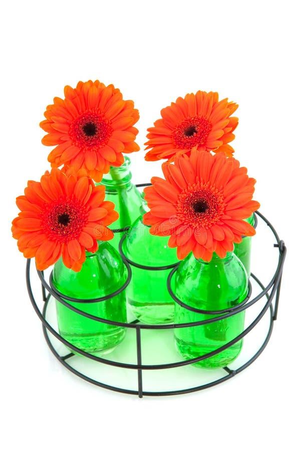 Oranje Gerber royalty-vrije stock fotografie