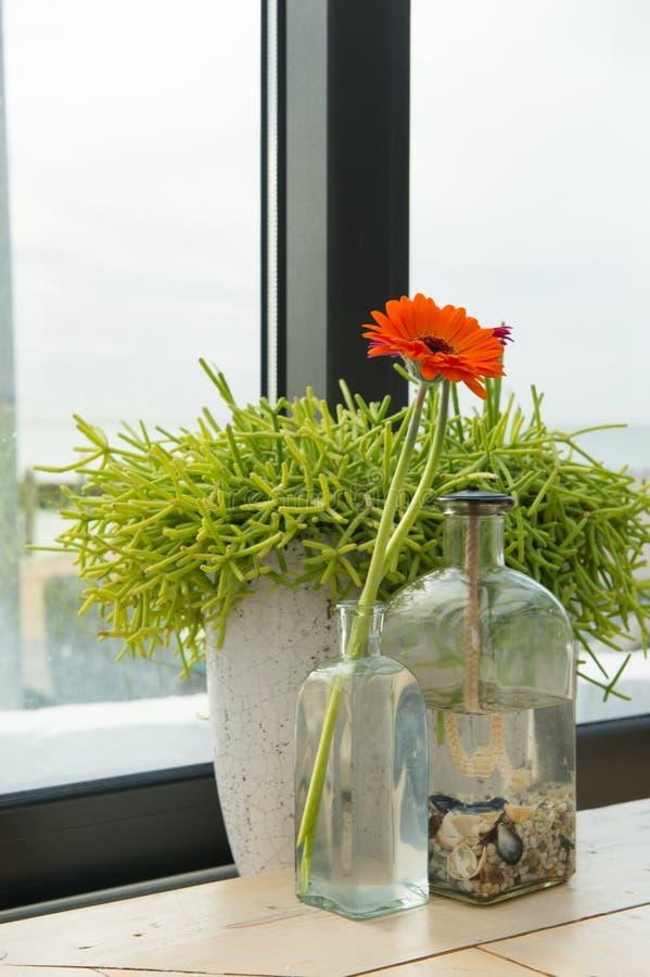 Oranje Gerber in vaas royalty-vrije stock fotografie
