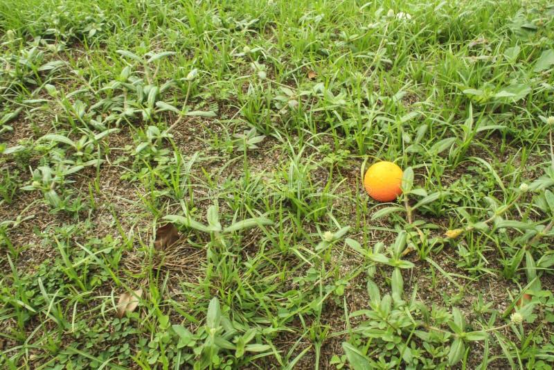 Oranje golfbal op groen gras stock foto's