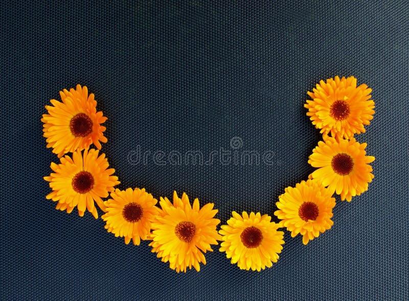 Oranje goudsbloem op een zwarte achtergrond stock fotografie