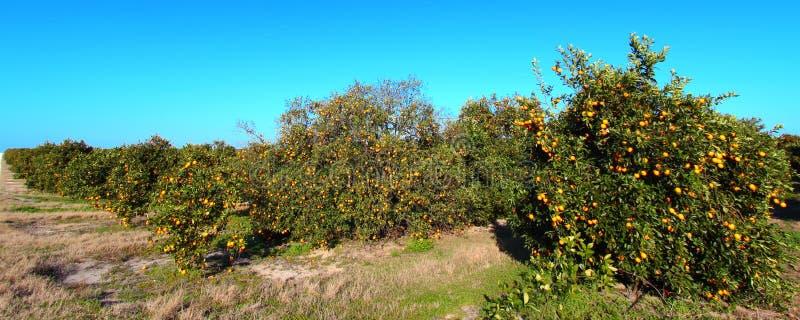 Oranje het Bosjepanorama van Florida stock afbeeldingen