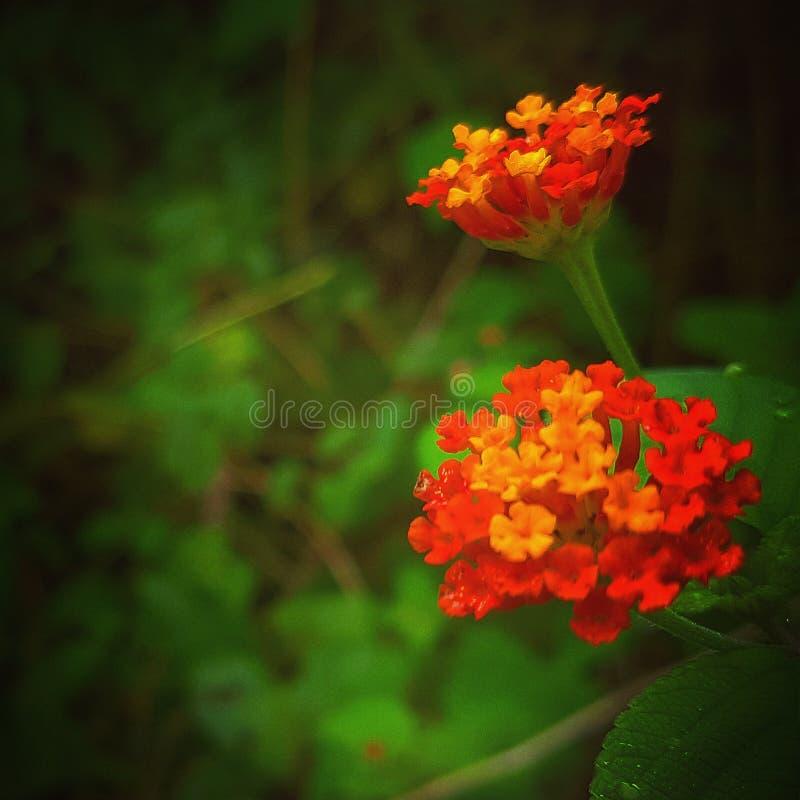 Oranje het voelen stock foto's