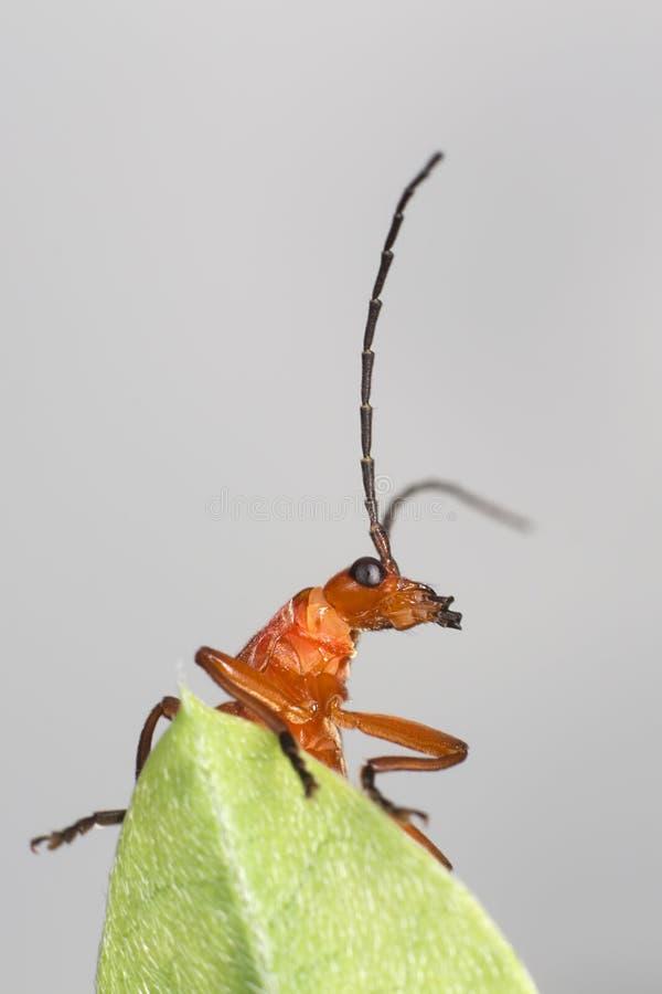 Oranje insect op zijn blad royalty-vrije stock fotografie