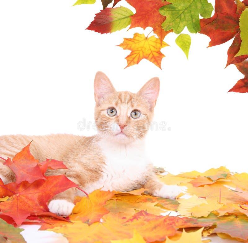 Download Oranje kat stock foto. Afbeelding bestaande uit dier - 10782120