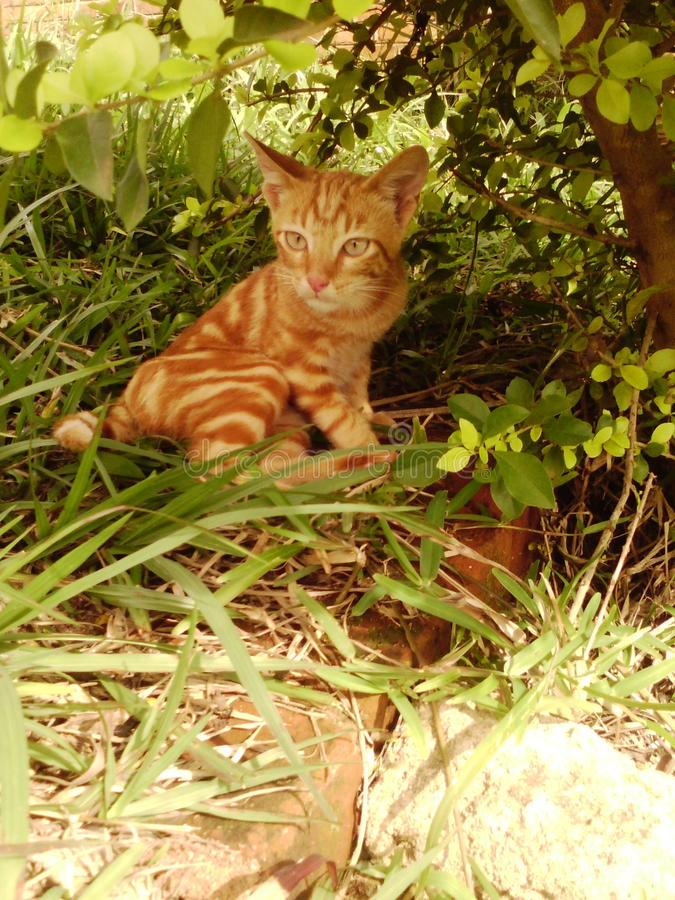 Oranje Kat stock afbeelding