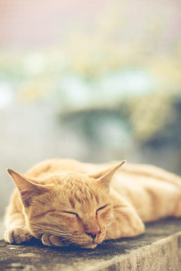 Download Oranje Kat stock afbeelding. Afbeelding bestaande uit ontspan - 54075963