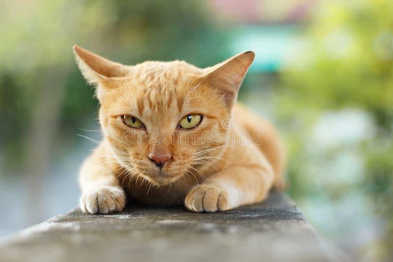 Download Oranje Kat stock afbeelding. Afbeelding bestaande uit haar - 54076085