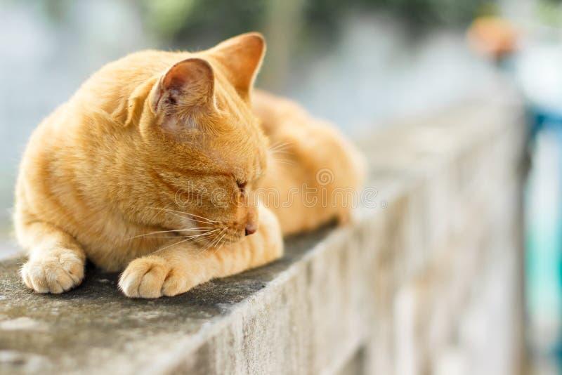 Download Oranje Kat stock foto. Afbeelding bestaande uit leuk - 54076810
