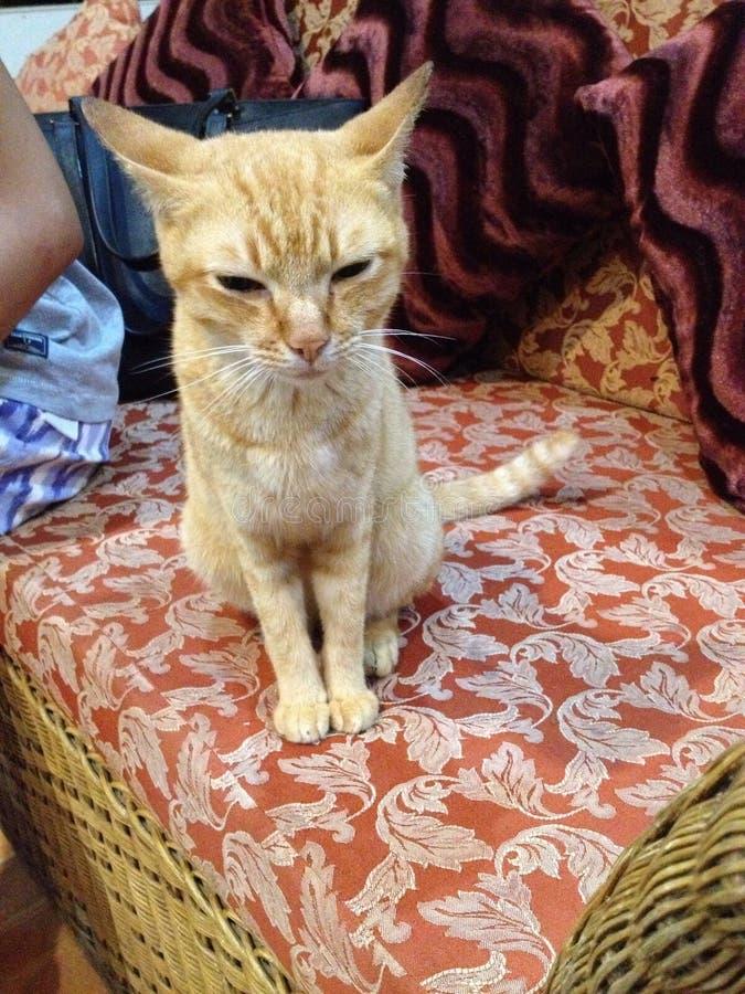 Oranje Kat royalty-vrije stock afbeeldingen