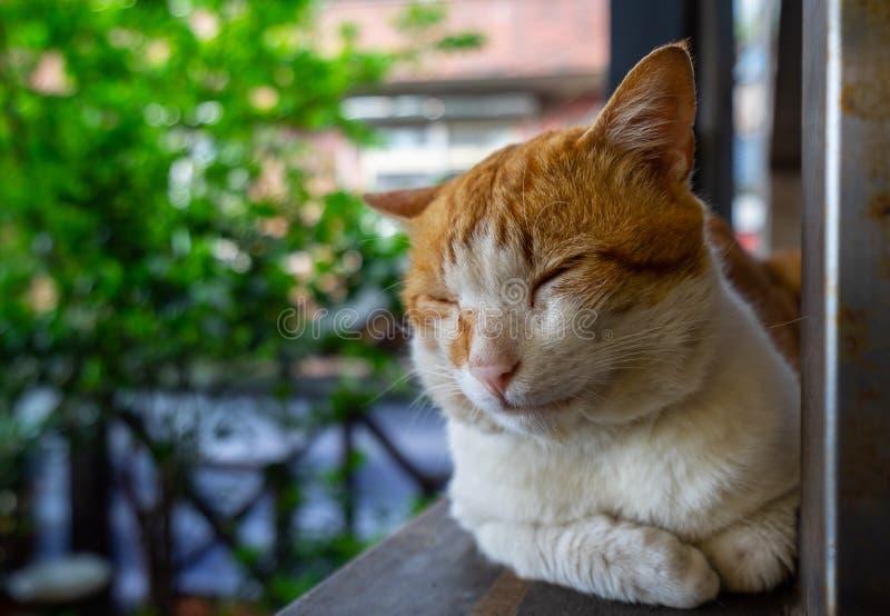 Oranje kat die op een bank leggen royalty-vrije stock afbeeldingen