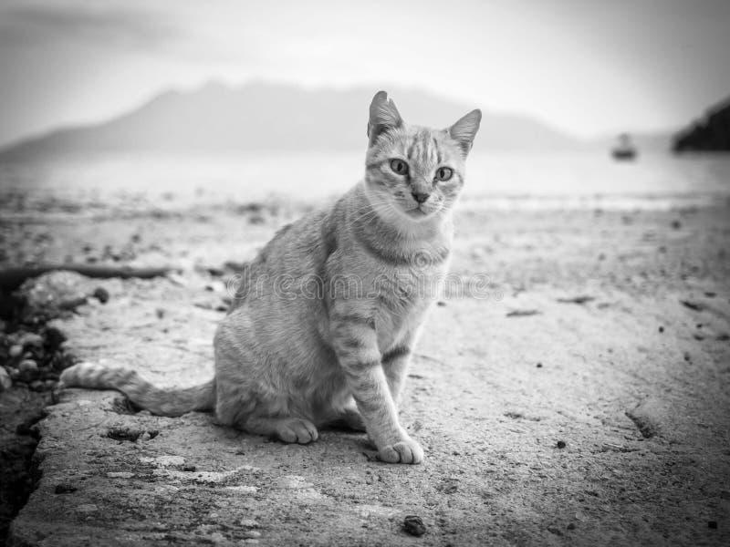 Oranje kat die op het strand in de zwart-witte beelden van Griekenland lopen royalty-vrije stock afbeelding
