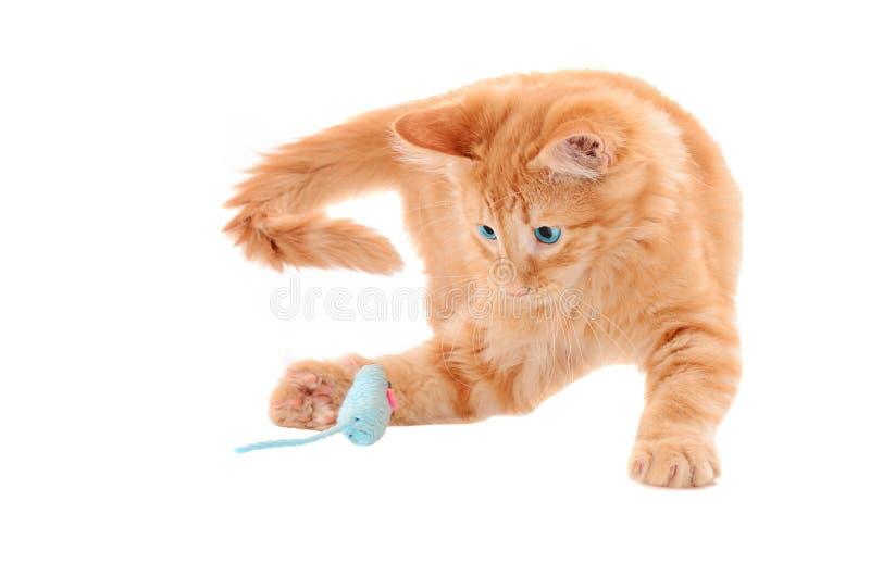 Oranje Kitten Playing met Toy Mouse stock foto's