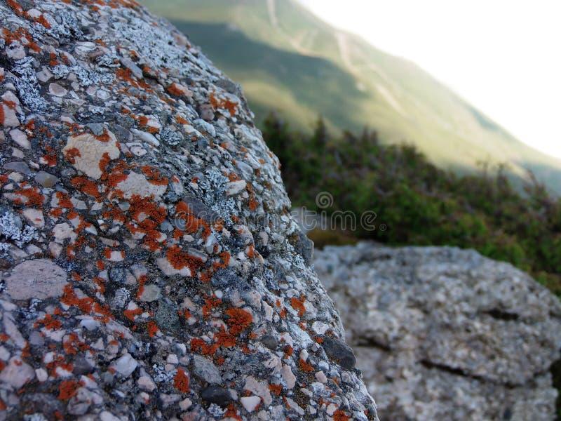 Oranje mos op een rots royalty-vrije stock fotografie