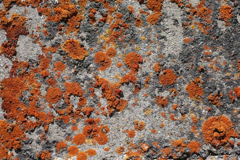 Oranje mos op rots stock foto's