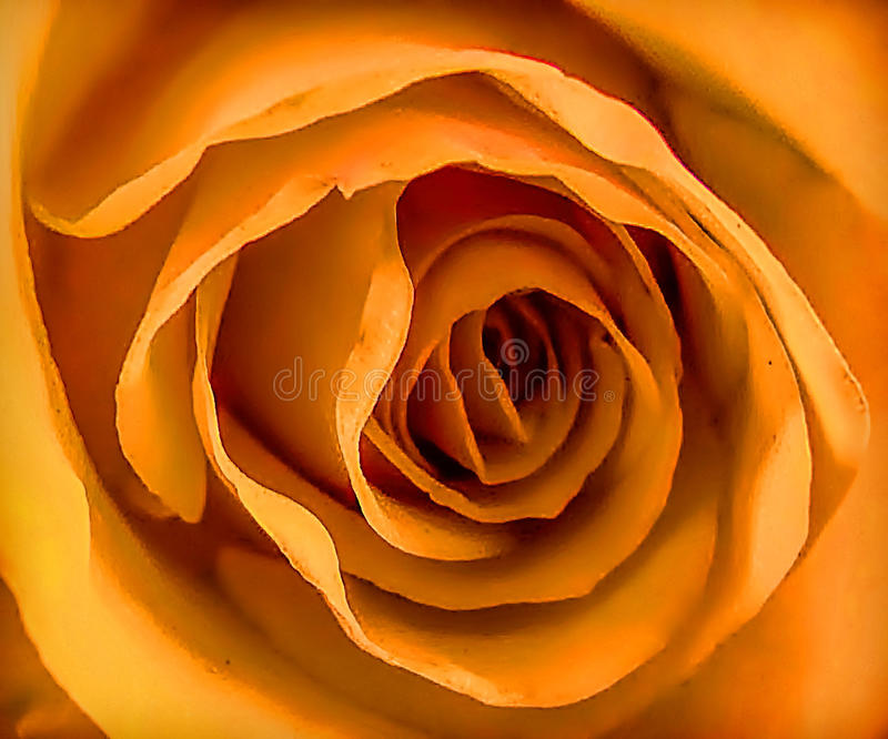 Oranje nam Macro toe royalty-vrije stock foto's