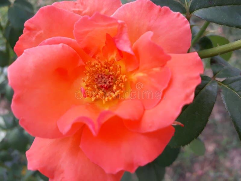 Oranje nam schoonheid van aard toe royalty-vrije stock fotografie