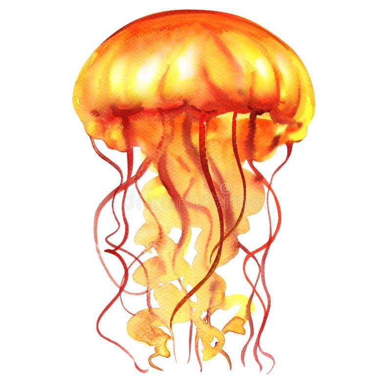 Oranje Oceaanwaterkwallen, geïsoleerde kwal, het overzeese leven, waterverfillustratie royalty-vrije illustratie