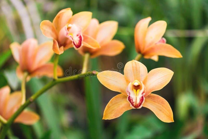 Oranje Orchideebloem in tropische bosaard stock afbeelding