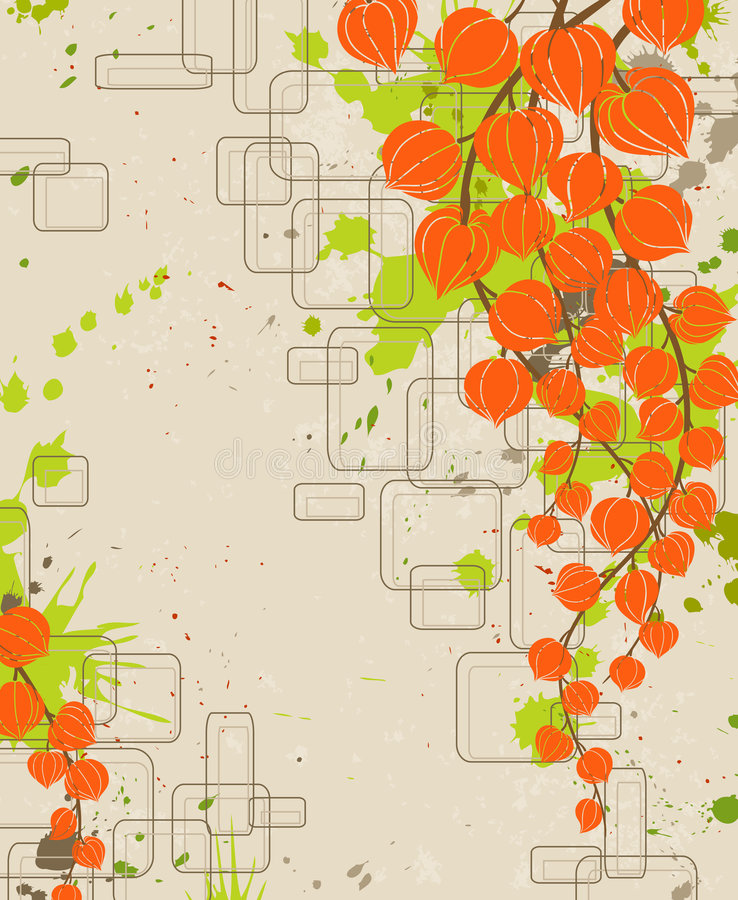 Oranje physalis. vector illustratie