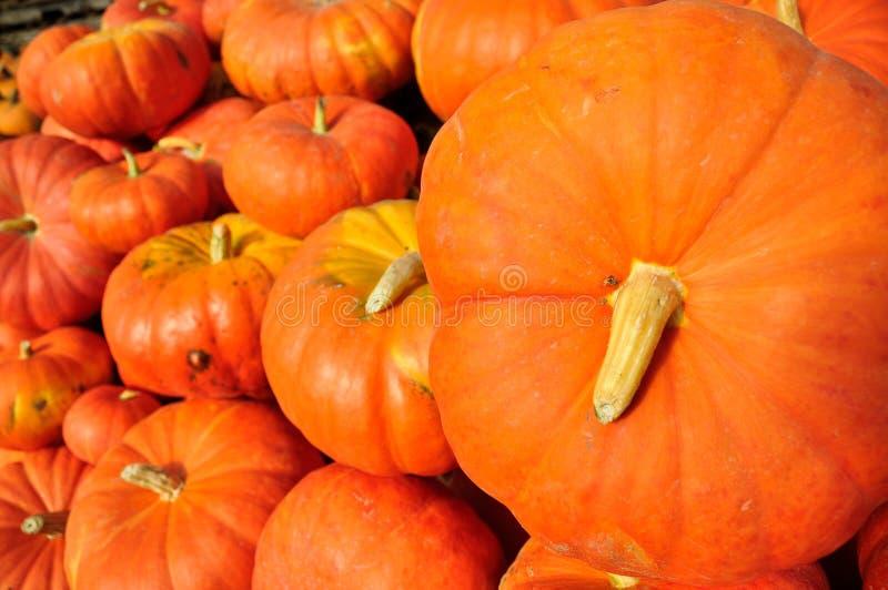 Oranje Pompoenen stock afbeeldingen
