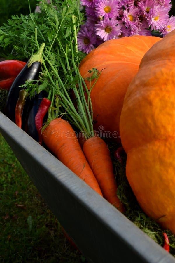 Oranje pompoenen en wortelen in een kruiwagen royalty-vrije stock afbeelding