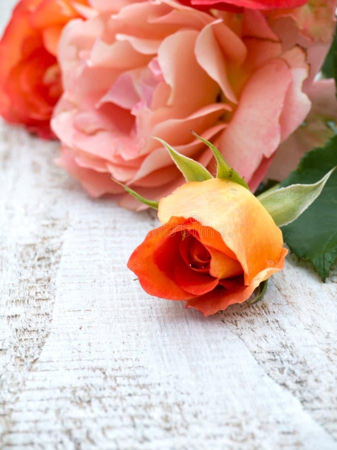Oranje rozen en knop op de witte geschilderde achtergrond royalty-vrije stock afbeeldingen
