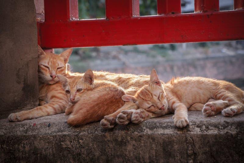 Oranje Stapel van Cuteness stock fotografie