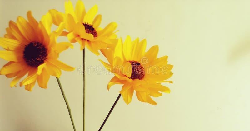 Oranje stilleven op witte achtergrond stock fotografie
