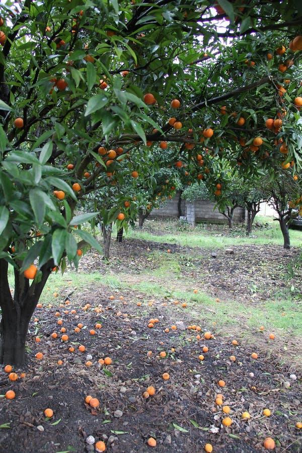 Oranje tuin royalty-vrije stock afbeelding