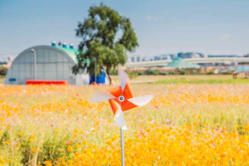 Oranje vuurrad met het gele gemeenschappelijke gebied van de kosmosbloem in Koreaans plattelandsdorp royalty-vrije stock fotografie