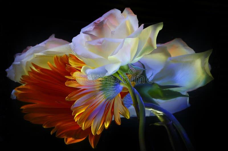 Oranje witte gerbera, nam en hun bezinningen toe royalty-vrije stock fotografie