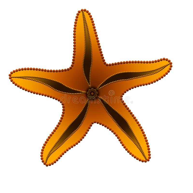 Oranje zeester royalty-vrije stock afbeeldingen