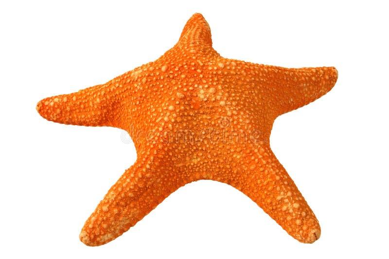 Oranje zeester, die op a wordt geïsoleerd royalty-vrije stock foto