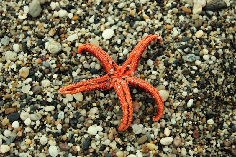Oranje zeester op stenen royalty-vrije stock foto