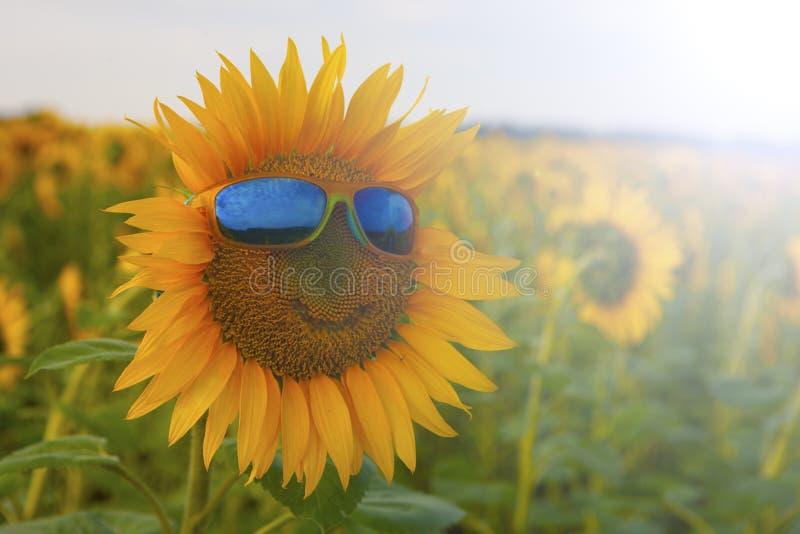Oranje zonnebloem met een glimlach in gele zonnebril met blauwe glazen op een gebied van zonnebloemen stock fotografie