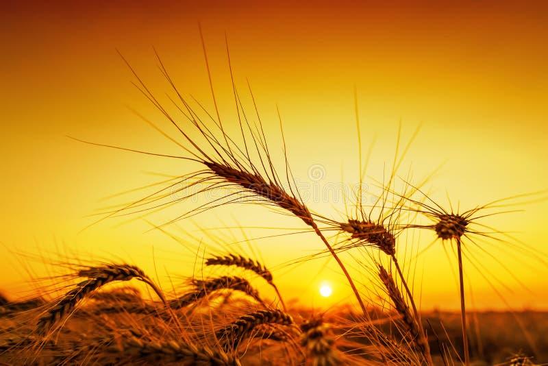 Oranje zonsondergang over oogstgebied royalty-vrije stock afbeeldingen