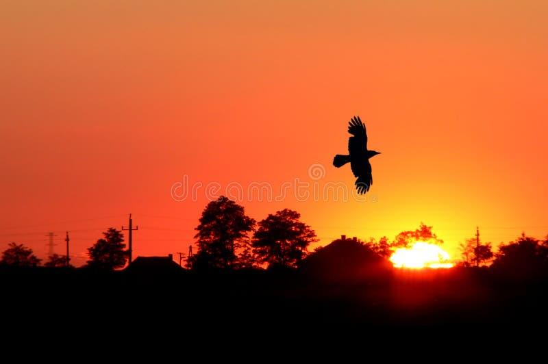 Oranje zonsopgang royalty-vrije stock fotografie